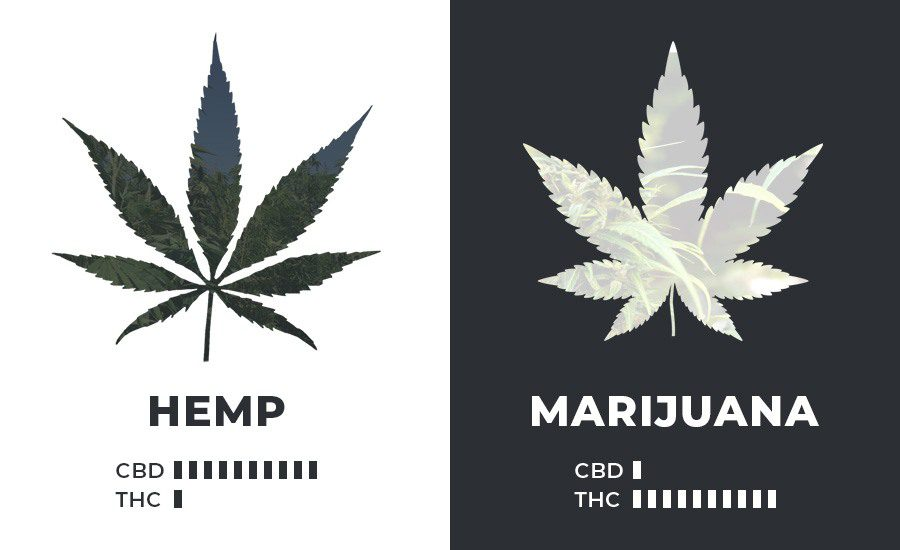 Hemp vs. Marijuana