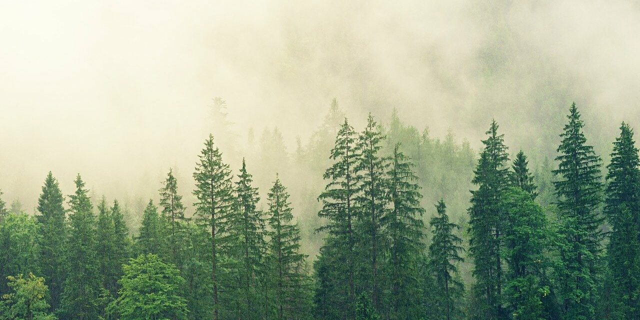 Supply Chain Decarbonization: What Corporations Must Consider