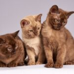 Pets & Pandemic – Tips To Plan In Advance